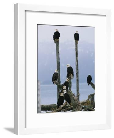 Eagles Perch on Wooden Posts-Klaus Nigge-Framed Photographic Print