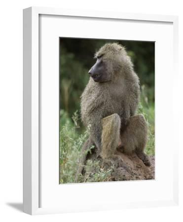 Close View of a Baboon in Profile-Richard Nowitz-Framed Photographic Print