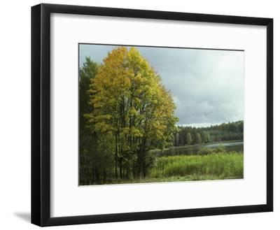 Cloud-Filled Sky over a Lake Surrounded by Trees-Klaus Nigge-Framed Photographic Print