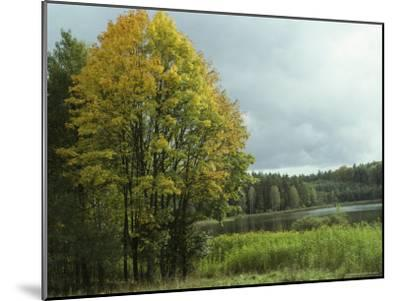 Cloud-Filled Sky over a Lake Surrounded by Trees-Klaus Nigge-Mounted Photographic Print