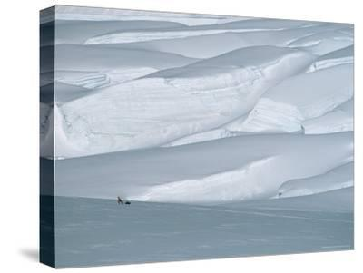 Climber in Denali Is Dwarfed by the Surrounding Snowy Landscape-Bill Hatcher-Stretched Canvas Print