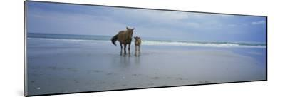 Wild Mare and Foal on the Beach North of Corolla-Stephen Alvarez-Mounted Photographic Print