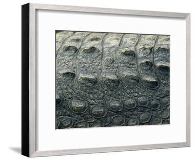 Close View of the Hide of an American Crocodile-Klaus Nigge-Framed Photographic Print