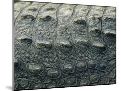 Close View of the Hide of an American Crocodile-Klaus Nigge-Mounted Photographic Print