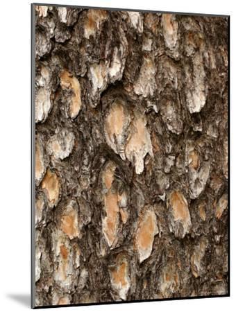 Close View of Pine Tree Bark-Charles Kogod-Mounted Photographic Print