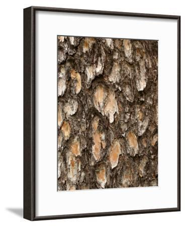 Close View of Pine Tree Bark-Charles Kogod-Framed Photographic Print
