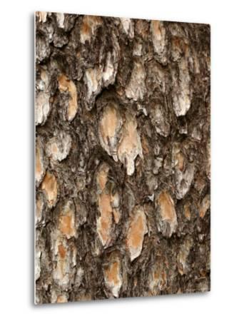 Close View of Pine Tree Bark-Charles Kogod-Metal Print