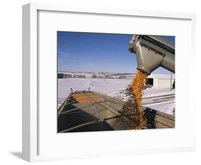 Corn Pours from an Auger into a Grain Truck-Joel Sartore-Framed Photographic Print