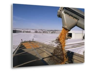 Corn Pours from an Auger into a Grain Truck-Joel Sartore-Metal Print