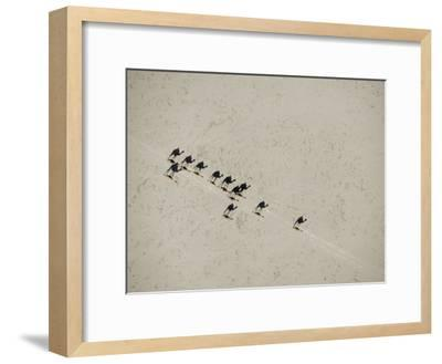 Long Shadows of Camels across Salt Flats above Lake Assal, Djibouti--Framed Photographic Print