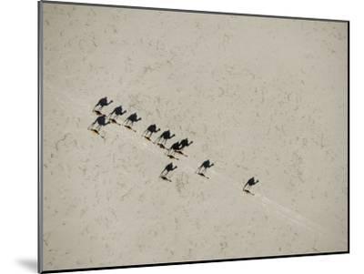 Long Shadows of Camels across Salt Flats above Lake Assal, Djibouti--Mounted Photographic Print