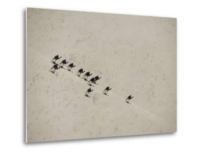 Long Shadows of Camels across Salt Flats above Lake Assal, Djibouti--Metal Print