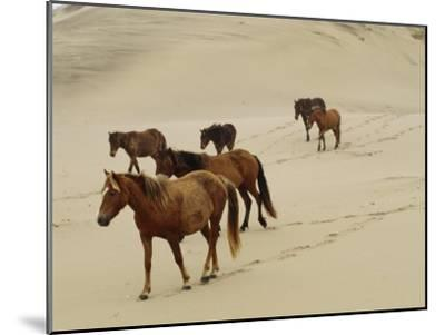 A Group of Wild Horses in the Dunes of Sable Island--Mounted Photographic Print