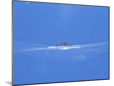 A Spider Perched on Its Web-John Dunn/Arctic Light-Mounted Photographic Print