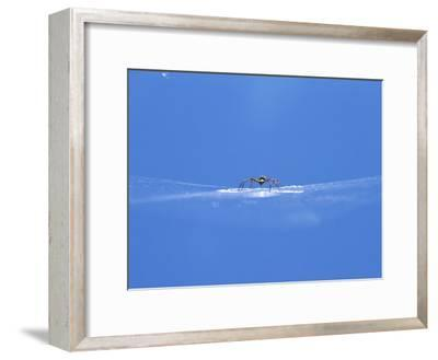 A Spider Perched on Its Web-John Dunn/Arctic Light-Framed Photographic Print