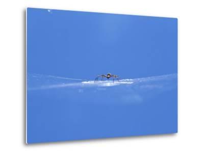 A Spider Perched on Its Web-John Dunn/Arctic Light-Metal Print