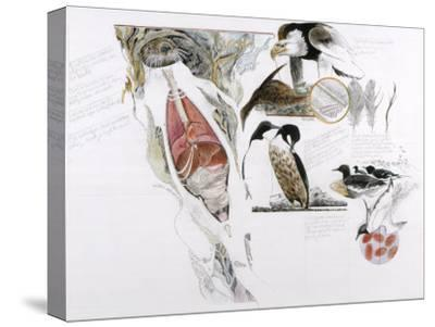 Diagram of the Effects of Oil and Oil Spills on Wildlife-Jack Unruh-Stretched Canvas Print