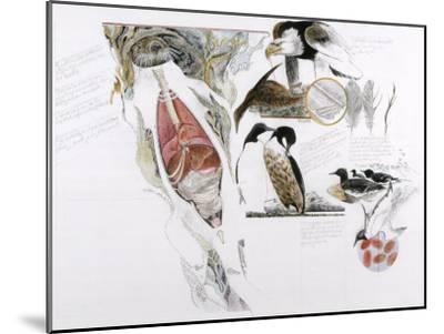 Diagram of the Effects of Oil and Oil Spills on Wildlife-Jack Unruh-Mounted Photographic Print