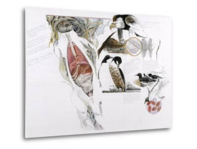 Diagram of the Effects of Oil and Oil Spills on Wildlife-Jack Unruh-Metal Print