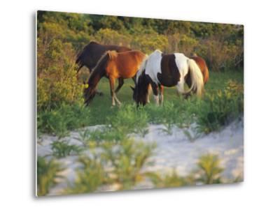 Wild Ponies Graze on Tender Grasses-Raymond Gehman-Metal Print