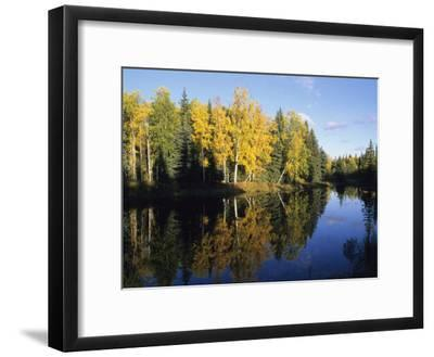 Birch Trees Reflected in a Pond in the Fall-Rich Reid-Framed Photographic Print