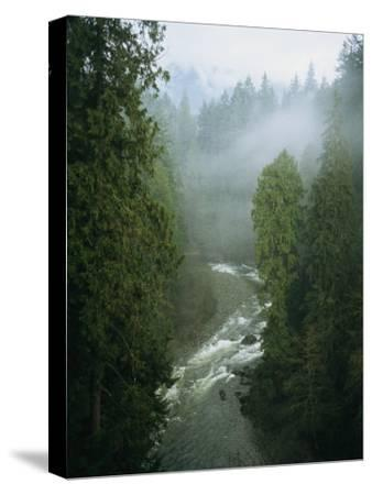 A Salmon Spawning River Runs Through a Temperate Rainforest-Taylor S^ Kennedy-Stretched Canvas Print