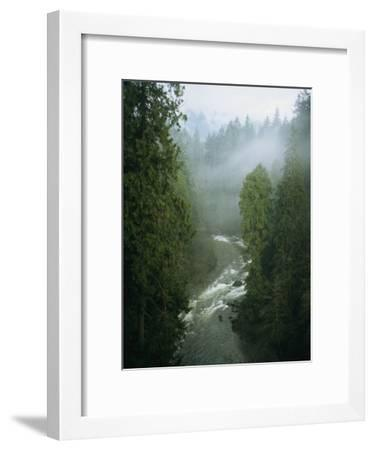 A Salmon Spawning River Runs Through a Temperate Rainforest-Taylor S^ Kennedy-Framed Photographic Print