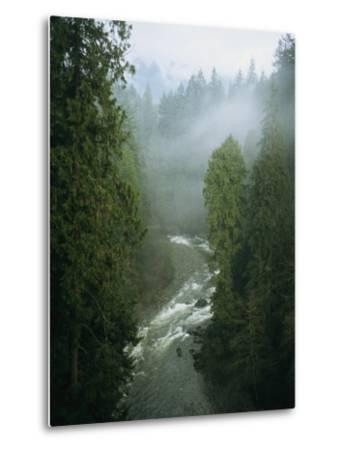 A Salmon Spawning River Runs Through a Temperate Rainforest-Taylor S^ Kennedy-Metal Print