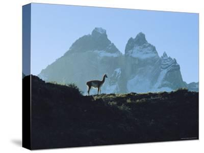 Guanaco Stands Against Mountain Backdrop, Andes Mountains, Tierra del Fuego, Chile-Sam Abell-Stretched Canvas Print
