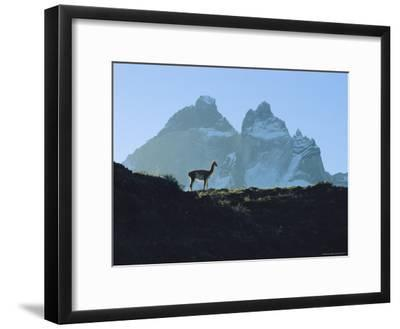 Guanaco Stands Against Mountain Backdrop, Andes Mountains, Tierra del Fuego, Chile-Sam Abell-Framed Photographic Print