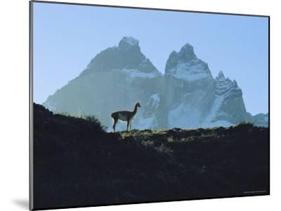 Guanaco Stands Against Mountain Backdrop, Andes Mountains, Tierra del Fuego, Chile-Sam Abell-Mounted Photographic Print
