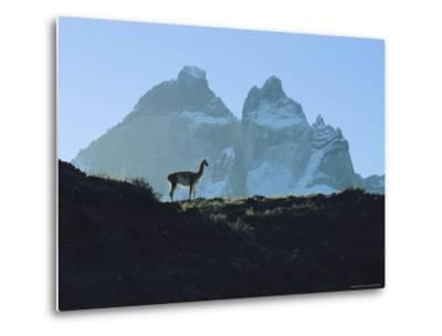 Guanaco Stands Against Mountain Backdrop, Andes Mountains, Tierra del Fuego, Chile-Sam Abell-Metal Print