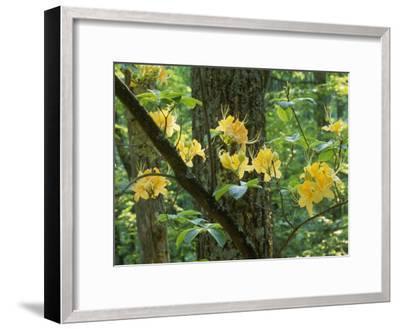 Watoga State Park, West Virginia-James P^ Blair-Framed Photographic Print