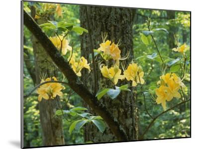Watoga State Park, West Virginia-James P^ Blair-Mounted Photographic Print