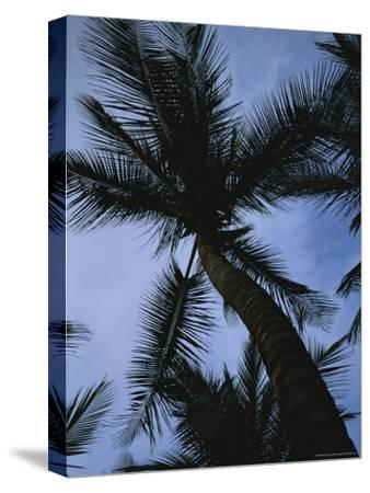 Skyward View of a Palm Tree Silhouetted against the Sky-Taylor S^ Kennedy-Stretched Canvas Print