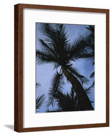 Skyward View of a Palm Tree Silhouetted against the Sky-Taylor S^ Kennedy-Framed Photographic Print