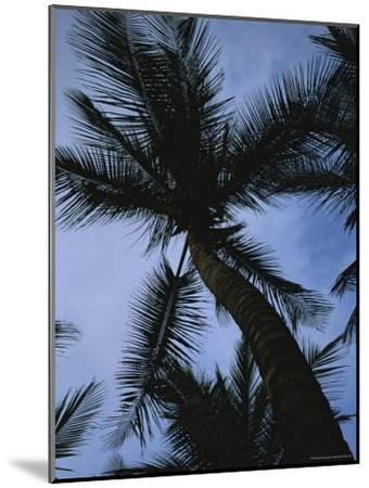 Skyward View of a Palm Tree Silhouetted against the Sky-Taylor S^ Kennedy-Mounted Photographic Print