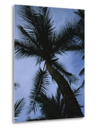 Skyward View of a Palm Tree Silhouetted against the Sky-Taylor S^ Kennedy-Metal Print