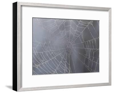 A Close View of Water Drops on a Spider Web-Taylor S^ Kennedy-Framed Photographic Print