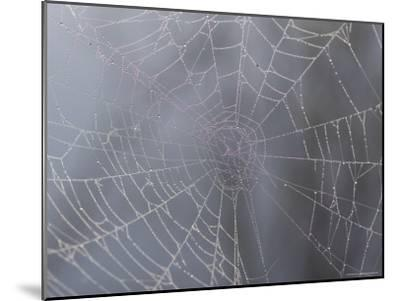 A Close View of Water Drops on a Spider Web-Taylor S^ Kennedy-Mounted Photographic Print