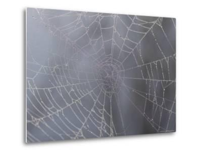 A Close View of Water Drops on a Spider Web-Taylor S^ Kennedy-Metal Print