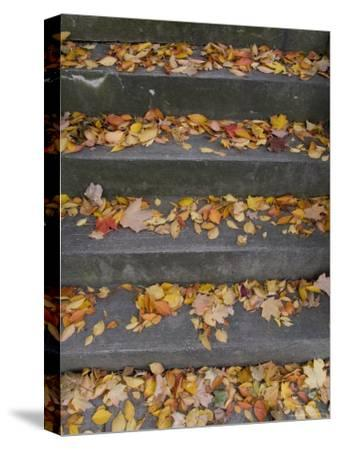 Autumn Leaves Lie on House Steps Giving Color to the Drab Cement, Washington, District of Columbia-Taylor S^ Kennedy-Stretched Canvas Print