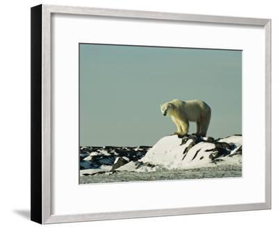 A Polar Bear Stands Atop a Snow-Covered Rock-Norbert Rosing-Framed Photographic Print