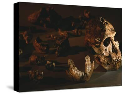 A Two-Million-Year-Old Fossil of Australopithecus Robustus-Kenneth Garrett-Stretched Canvas Print