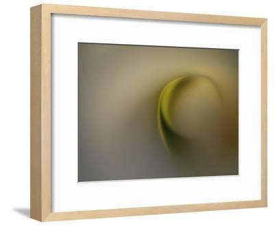 A Detail of a Calla Lily Flower-Raul Touzon-Framed Photographic Print