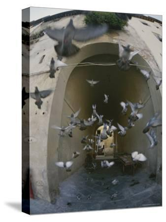 A Flock of Pigeons Fly out of an Arched Passageway in Siena, Italy-Raul Touzon-Stretched Canvas Print