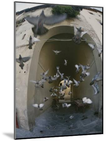 A Flock of Pigeons Fly out of an Arched Passageway in Siena, Italy-Raul Touzon-Mounted Photographic Print