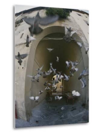 A Flock of Pigeons Fly out of an Arched Passageway in Siena, Italy-Raul Touzon-Metal Print