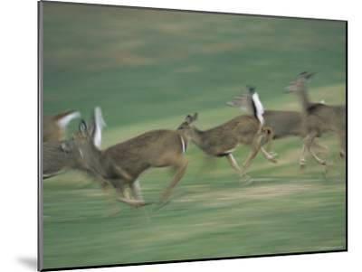 Panned View of White-Tailed Deer (Odocoileus Virginianus) Running-Michael Fay-Mounted Photographic Print