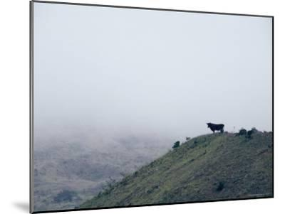 Lone Bull on Hill in Fog-Steve Winter-Mounted Photographic Print